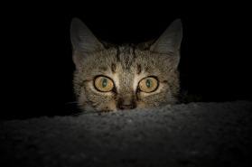 cat-1690799_640