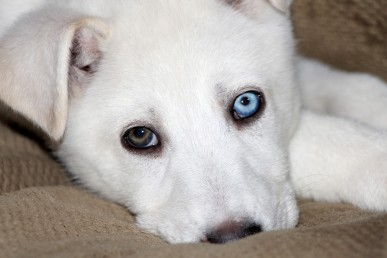 different-color-eyes